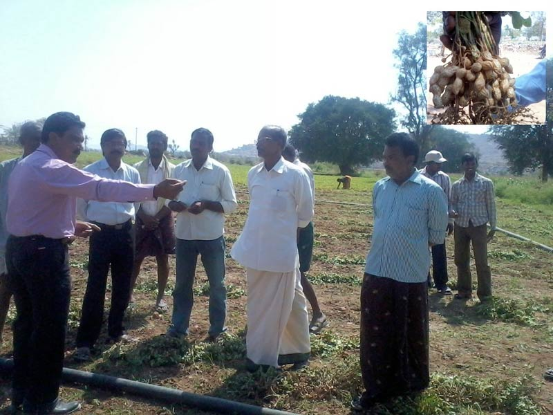 A Farm Ground for the Groundnut Farmers